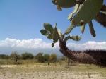 растения озера Энрикильо