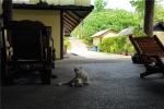 кот на острове Яо-Яй