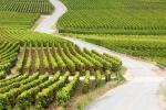 виноградники Шампани, Франция