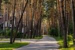 хвойный лес вокруг парк-отеля Дракино