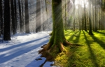 Человек воздействует на климат Земли разрушительнее, чем природа