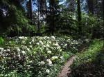 цветение в Арборетуме Мустила