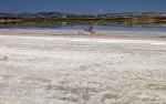 Ларнакское соляное озеро летом