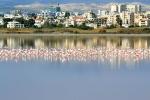 Ларнакское соляное озеро, Кипр