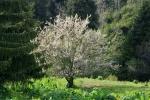 Бутаковское ущелье весной