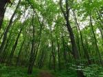 лес в Хвалынском нацпарке