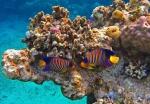 дайвинг, Коралловые острова