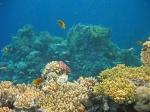 подводный мир, Коралловые острова