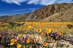 пустыня Анза Боррего, США