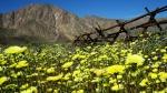 пустыня Анза Боррего в США