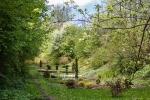 Кременецкий ботанический сад, Тернопольская область, Украина