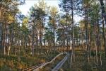 тропа в лесу Валкмуса