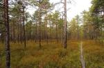 лес в Валкмусе