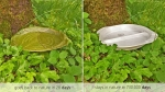 тарелка Leaf Republic и пластиковая