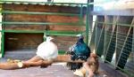 павлины в контактном зоопарке Бабин Двор