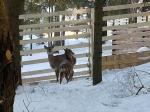 козлята в контактном зоопарке Бабин Двор