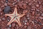 морская звезда на Темно-красном пляже Рабиды