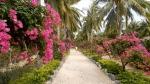 Остров Орхидей, Нячанг