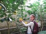 Банановая ферма, Рожны