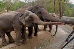 слоны в зоопарке Као Кео