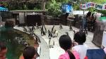пингвины в зоопарке Као Кео