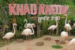 розовые фламинго в зоопарке Као Кео