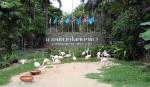 фламинго в зоопарке Као Кео