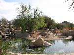 фламинго в зоопарке Фригия
