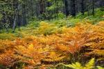 биостанция Чистый лес в Тверской области