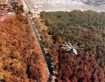 Рыжий лес