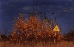 Рыжий лес в Чернобыле