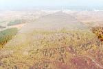 Рыжий лес, Чернобыль
