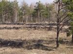 Рыжий лес, Чернобыль, Украина