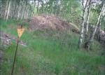 могильник в Рыжем лесу