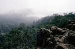 Национальный парк Дей Форест в Джибути