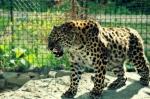 зоопарк в парке Подгорье