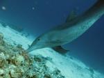 Риф Фанадир в Хургаде – сказочные глубины Красного моря