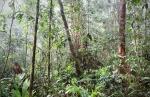 Национальный парк Сапо в Либерии