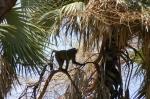 Нацпарк Диндер в Судане