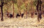 Dinder National Park in Sudan