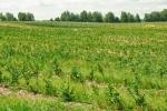 эко-ферма Озеряна, Украина
