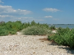 нудистский пляж на острове Дзендзик