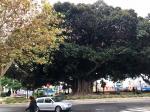 парк Каналехас