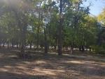 Старые деревья Ростовского зоопарка
