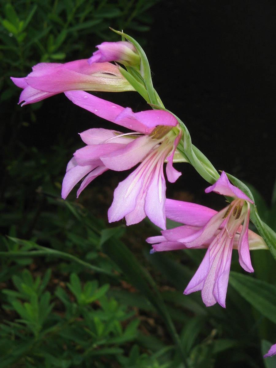 Уникальная флора урочища Аманкутан