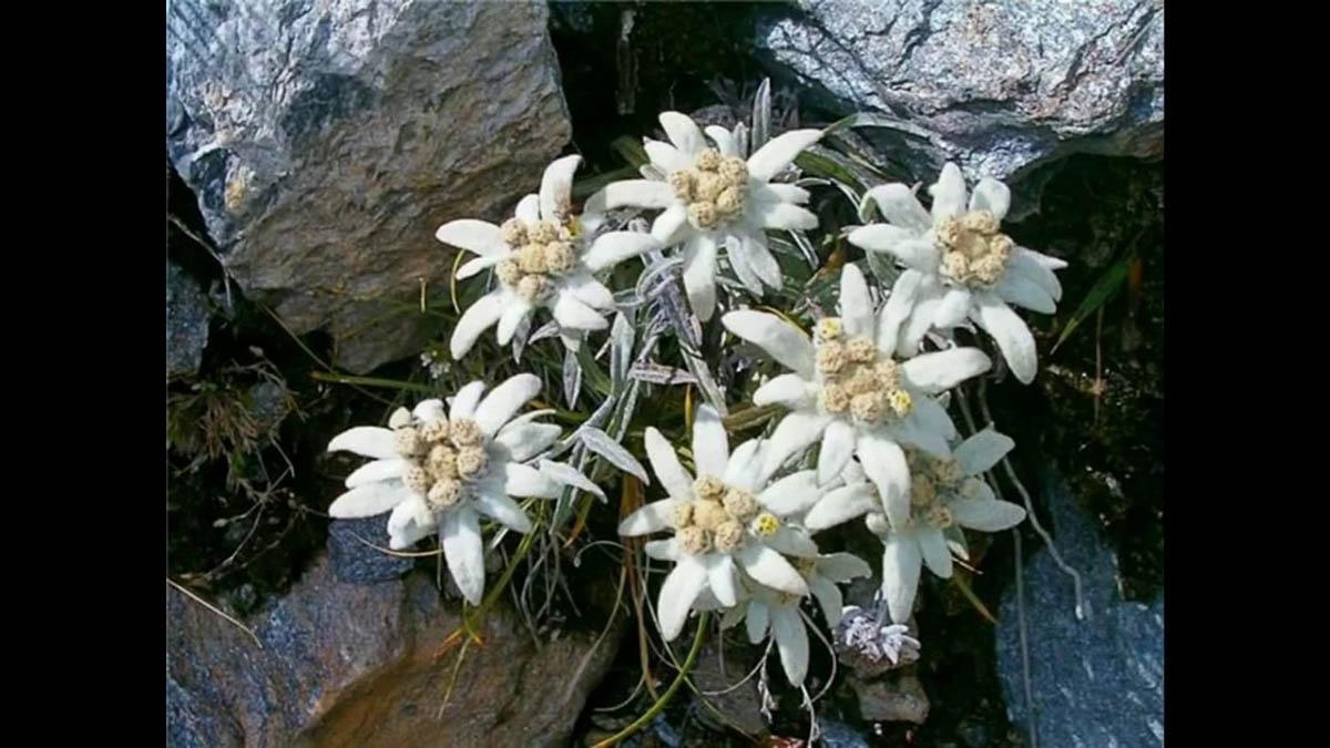 Уникальная флора Ключевского парка