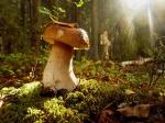 в Савранском лесу