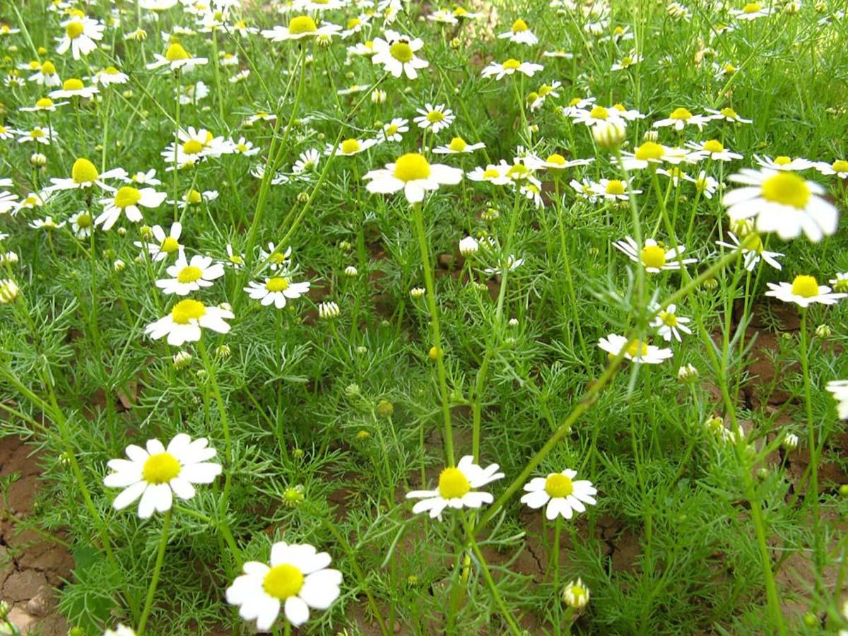 Все самое интересное о лекарственных травах