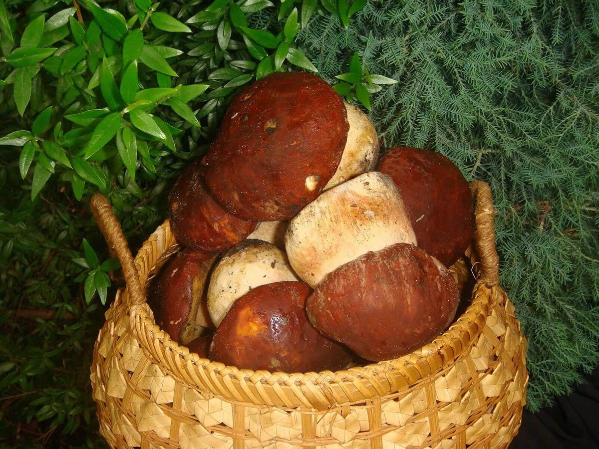 Белый гриб. Вкусное грибное блюдо – жульен