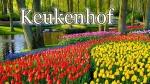 Когда лучше посетить нидерландский парк цветов Кёкенхоф в 2019 году
